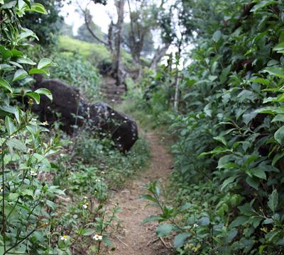 sg-trail1